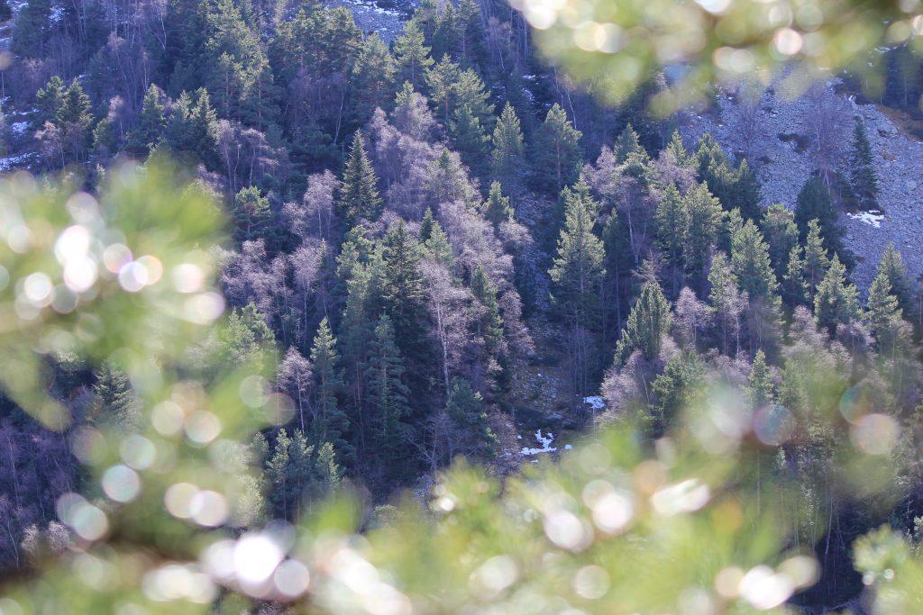 Fôret d'une vallée cachée du pic du canigou